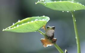 frog with plant