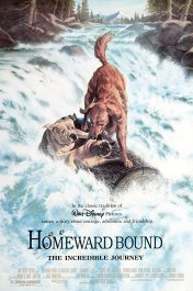 Homeward bound poster