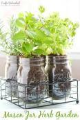 mason jar plants